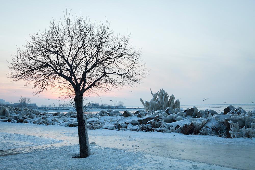witness tree.jpg