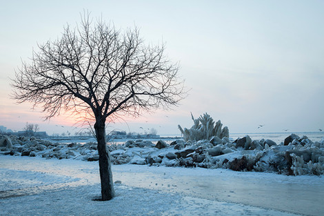 Creative Climate Awards: The Witness Tree