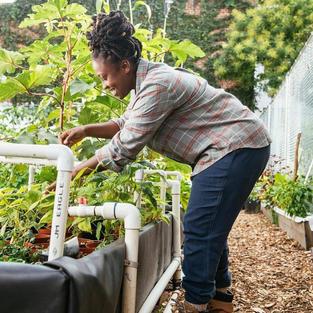 Yemi Amu / Oko Urban Farms