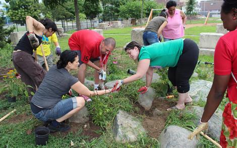 Native Species Planting