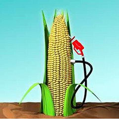 local business_biodiesel-industry-1.jpg