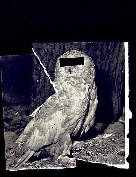 """Derek Owens, """"Owl"""""""