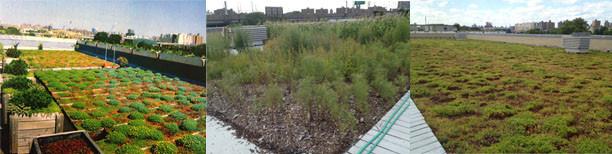 greenroof_soil-system.jpg