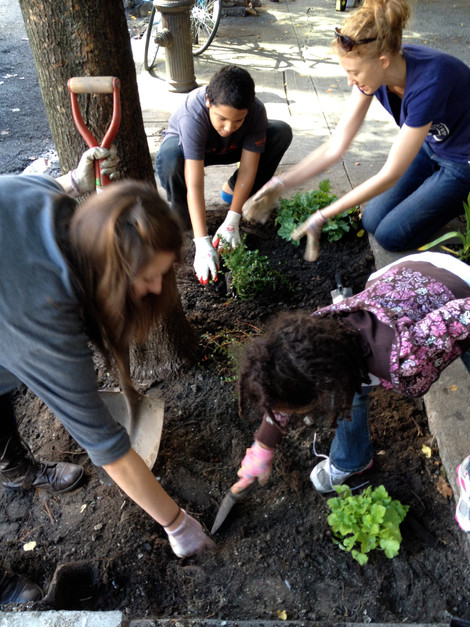Caring for 350 Trees in 2014!