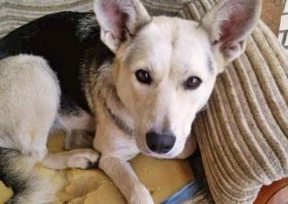 Индивидуального предпринимателя владельцы домашних животных и зоозащитники обвиняют в жестоком обращ