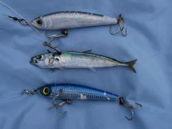 Pêche 158