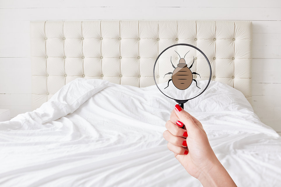 Woman holding magnifying glass over bed bug.jpg