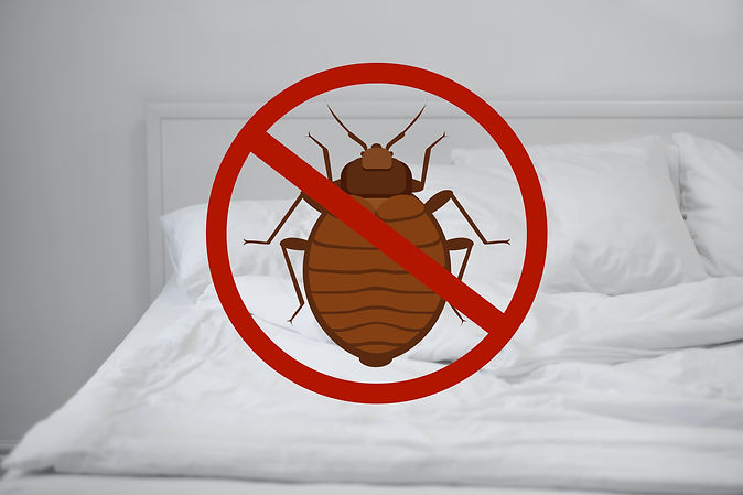 Stop bug sign and clean bed in room.jpg