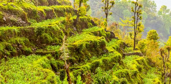 nature india