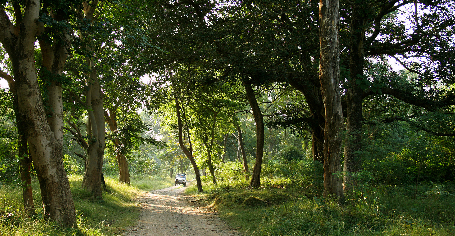 forest india