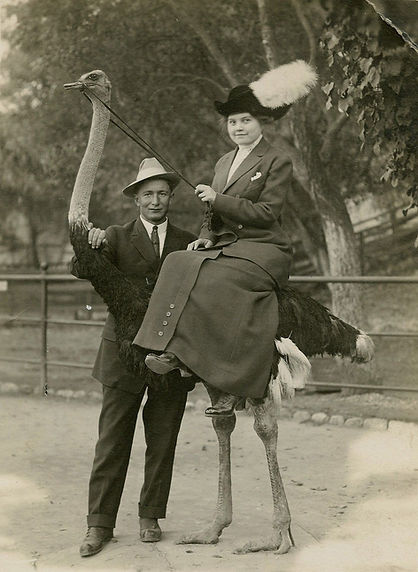Ostrich3.jpg