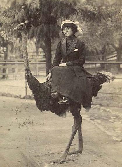 Ostrich5.jpg