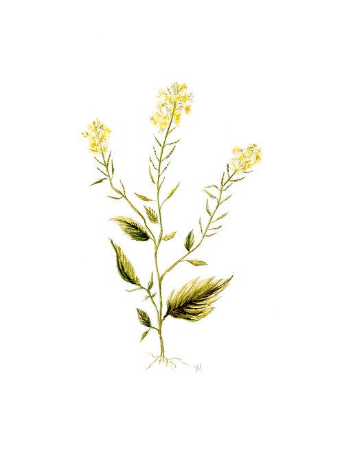 Mustard Botanical Watercolor Print