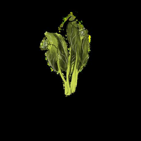 Chinesebroccoli.png