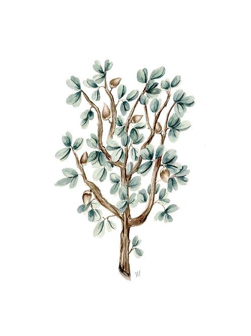 Myrrh Botanical Watercolor Print
