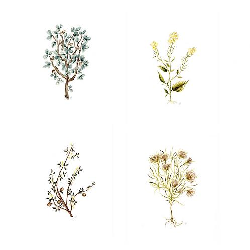 Set of 4 Botanical Prints (Your Choice!)