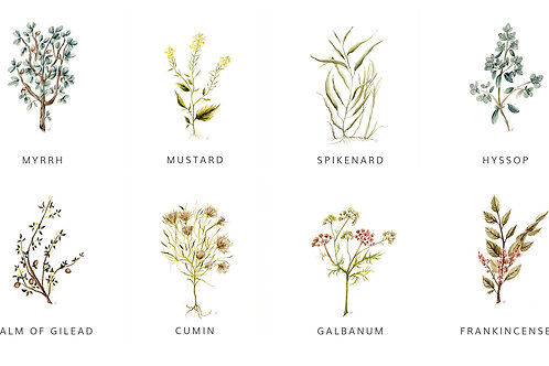 Entire Botanical Print Collection