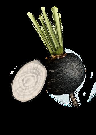 blackradish2.png