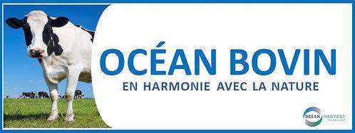 Océan Bovin/Bovine