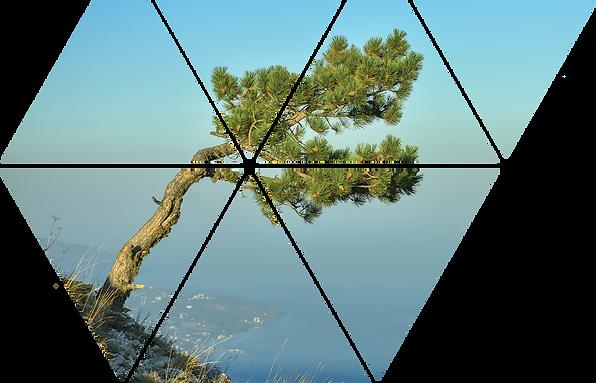 Retreat Tree.png