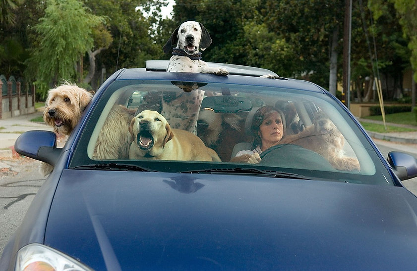 """Still from 2007's """"Year of the Dog."""""""