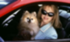 "Nicole Kidman and her cherished dog in 1995's ""To Die For."""