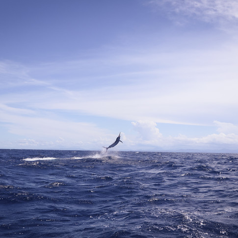 Black Marlin Charters.jpg
