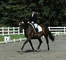Toni Mari Horse Books Sport Horses