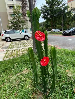 Josephine Chia, Riji, Singapore