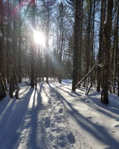 Winter Forest Light Shining.jpg