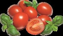tomaat basilicum.png