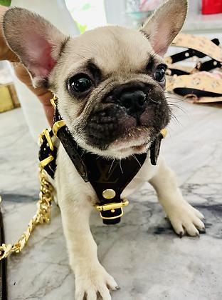 Puppy Set leather