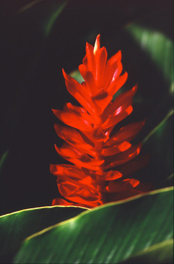 fleurexotic001
