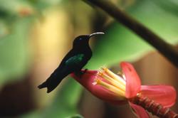 colibri001