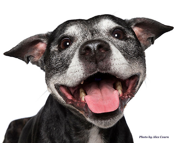 alex-cearns-happy-pooch-dog-photography-