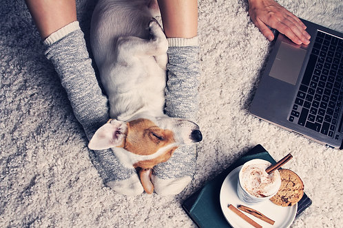 Learn Basic Canine Massage & Acupressure Virtually, with Modern Dog Massage!
