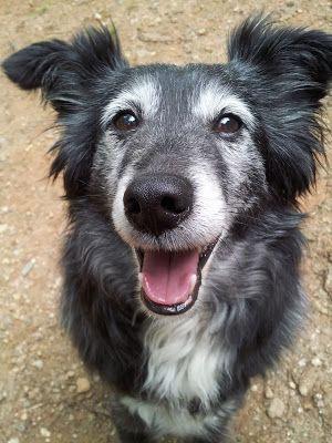 Canine Arthritis Management Plan