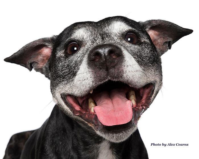 The Grey Dog Blog