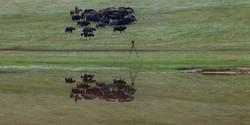 Lac Terkhiin Tsagaan Mongolie