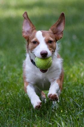 Doggie Park Visit (45 min.)