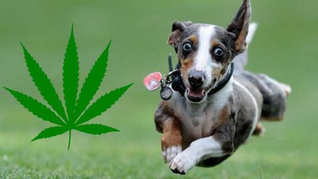 Pups and Pot