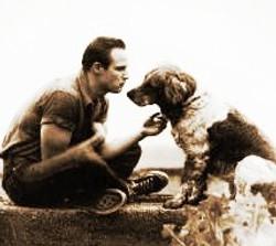 brando-dog.jpg 2014-8-4-11:15:45 2014-8-18-15:51:50