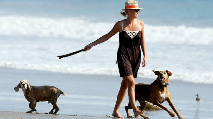 Hollywood Hotties who Help Hounds
