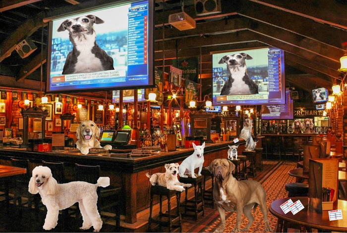 Pup Pub Trivia Tuesday - Are you a dog whisperer?