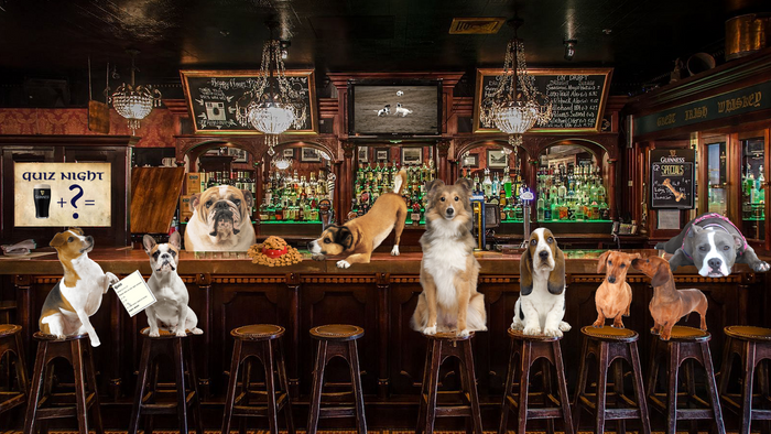 It's Pup Pub Trivia Tuesday...What dog breed are you?