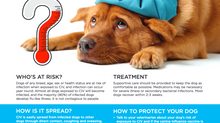 Dog Flu Season - Q&A