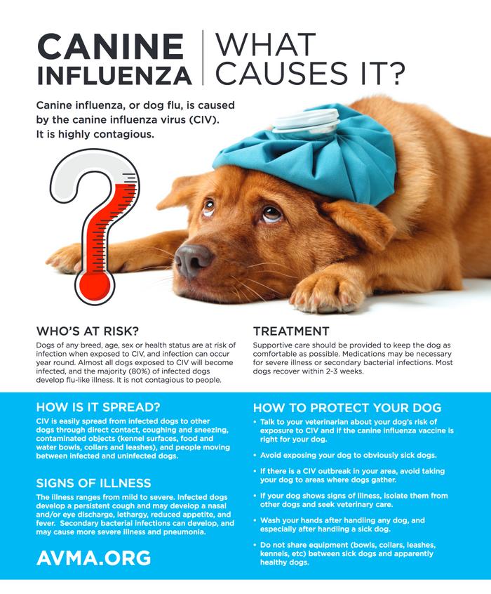 Dog Flu Season - Q&A