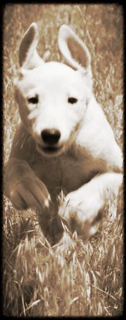 Dog Run 2014-8-4-14:4:39