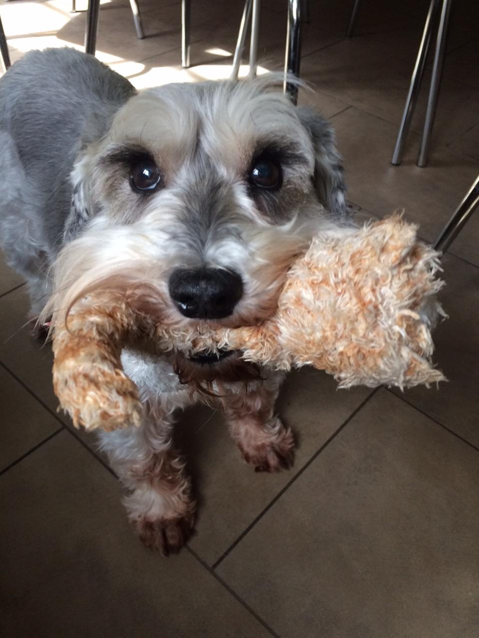 Playful Oscar!