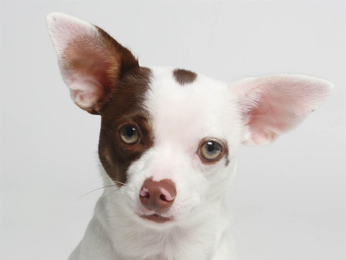 tdy-130919-deaf-dog-thor.ss_full.jpg